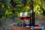 Tổng hợp những chai rượu vang giá rẻ và chất lượng nhất thị trường