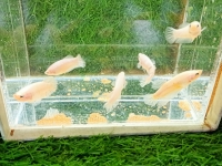Top địa điểm mua bán cá cảnh uy tín tại Hải Phòng