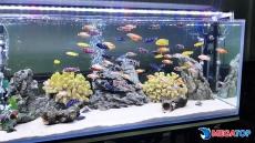 Top 6 loại cá ali có giá nhất hiện nay