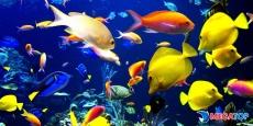 Top 9 cửa hàng cá cảnh uy tín, chất lượng tại Phú Yên