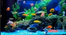 Top 10 cửa hàng cá cảnh đẹp nhất Tây Ninh
