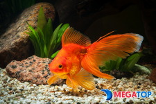 Top 4 cửa hàng cá cảnh được ưa chuộng nhất tại Tuy Hòa