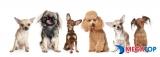Top 10 shop bán chó cảnh uy tín ở Hà Nội
