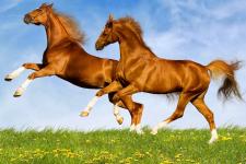 Sản phẩm Cao xương Ngựa nguyên cốt Tâm An | Đặt hàng nhanh | 0933 248 763