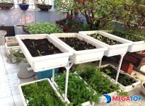 Mua kệ trồng rau 2 tầng ở đâu?