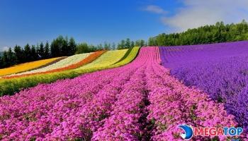 Mua hạt giống hoa ở đâu? Kỹ thuật gieo trồng hoa bằng hạt giống