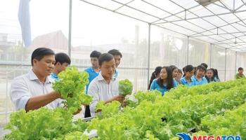 Nên mua hạt giống rau ở đâu đảm bảo an toàn?