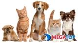 Top 12 shop bán thú cưng uy tín nhất thành phố Hồ Chí Minh