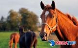Top những tác dụng của cao ngựa tới sức khỏe con người